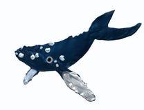 Walvis in de oceaan stock afbeeldingen