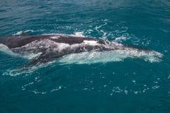 Walvis die kijker bekijken Stock Foto