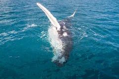 Walvis het golven Royalty-vrije Stock Foto's
