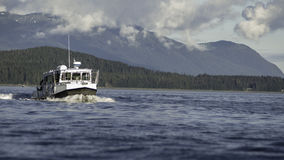 Walvis het Letten op bij de Binnenpassage Stock Fotografie