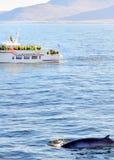 Walvis het letten op in IJsland Royalty-vrije Stock Foto's