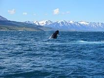 Walvis in Noordzee Stock Foto's