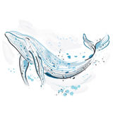 walvis Retro hand getrokken vectorillustratie Kaart, druk, t-shirt, prentbriefkaar, affiche Stock Foto's