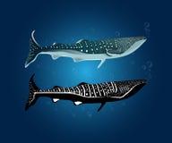 Walvis shark01 Royalty-vrije Stock Foto's