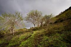 Walvisbaai in Santa Cruz Island, de Galapagos Royalty-vrije Stock Foto's