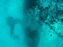 Walvishaai die de boot overgaan Royalty-vrije Stock Foto's
