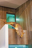 Walvismuseum Museu DA Baleia, Canical, Madera Royalty-vrije Stock Foto's