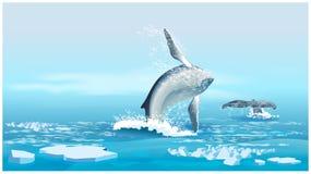 Walvissen in de Noordelijke Oceaan Royalty-vrije Stock Fotografie