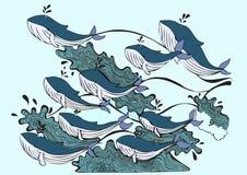 Walvissen die in het overzees spelen Royalty-vrije Stock Fotografie