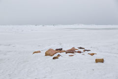 Walvissenstukken op Noordpooloverzees, Kruiwagen Alaska Royalty-vrije Stock Foto