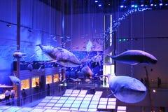 Walvisspecimen Stock Foto