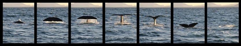 Walvisstaart stock foto's