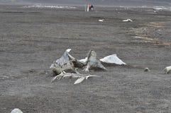 Walvisvaarder` s Baai, Antarctica Stock Afbeeldingen