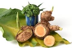 WAN-chak-mot-luk (nom thaïlandais) (xanthorrhiza Roxb de safran des Indes ) Tiges, sèches et en poudre Images stock