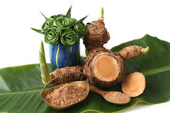Wan-chak-mot-luk (Thai name) (Curcuma xanthorrhiza Roxb.) Stalks, dried and powdered. Royalty Free Stock Image