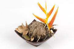Wan-chak-mot-luk. (thai name) (Curcuma xanthorrhiza Roxb.). Stock Image