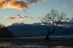Wanaka树在新西兰 免版税库存照片