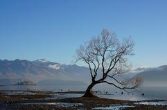 Wanaka树在秋天 免版税库存图片