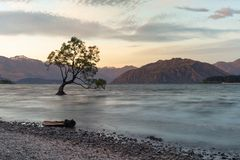 Wanaka alone tree on water lake with mountain background. New Zealand natural landscape background Royalty Free Stock Photography
