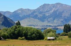 Wanaka - la Nuova Zelanda Fotografie Stock Libere da Diritti