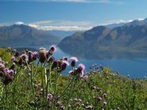 Wanaka lake. Flowers in front of wanaka lake Stock Photography
