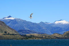 Wanaka - New Zealand Royalty Free Stock Photo