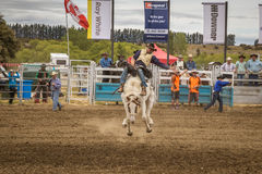 WANAKA, NEW ZEALAND - JANUARY 2, 2017: Cowboy participates in a saddle bronc horse riding competition in 54th Wanaka rodeo stock images