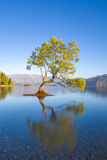 Wanaka New Zealand Stock Photo