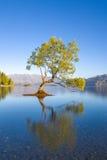 Wanaka Nya Zeeland Arkivfoto