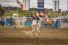 WANAKA NYA ZEELAND - JANUARI 2, 2017: Cowboyen deltar i en konkurrens för ridning för sadelbronchäst i den 54th Wanaka rodeon Arkivbilder
