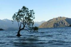 Wanaka sjön/det Wanaka trädet stock video