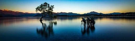 Wanaka träd Nya Zeeland arkivbilder