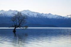 Free Wanaka Tree In New Zealand Royalty Free Stock Photography - 78318107