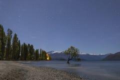 That Wanaka Tree and Lake Wanaka shoreline, Roys Bay, Wanaka, New Zealand. That Wanaka Tree and Lake Wanaka shoreline at night, Roys Bay, Wanaka, New Zealand Royalty Free Stock Photos