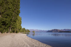That Wanaka Tree, Lake Wanaka, NZ Royalty Free Stock Image