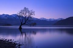 Wanaka tree in New Zealand. The famous tree at Lake Wanaka, South Island of New Zealand Stock Photography