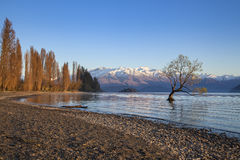 Wanaka tree in New Zealand Stock Image