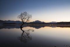 Wanaka tree in New Zealand. The Wanaka tree in morning, South Island of New Zealand Stock Images