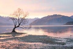 Wanaka tree. Wanaka , New Zealand Royalty Free Stock Photography