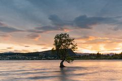 Wanaka water lake with stand alone tree. New Zealand natural landscape background Royalty Free Stock Photography