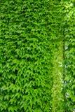 Wand auf dem Altbau in Rom Lizenzfreies Stockfoto