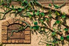 Wand bedeckt mit Traubenrebe Lizenzfreie Stockfotografie
