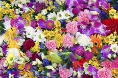 Wand der Blumen Lizenzfreie Stockfotos