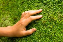 Wand der Natur Stockfoto