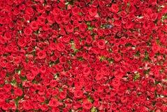Wand der Rosen stockbild