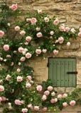 Wand der Rosen Stockfotografie