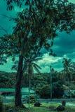Wand des Grüns Stockfoto