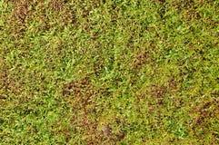 Wand des Grüns verlässt im Garten als natürliche Beschaffenheit Stockbild