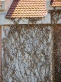 Wand des Hauses und der Reben Stockbilder