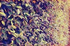 Wand-Gartenarbeit (Mignonretrostil) Lizenzfreie Stockfotografie